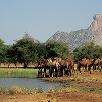 Book Exposes Myths About Drylands